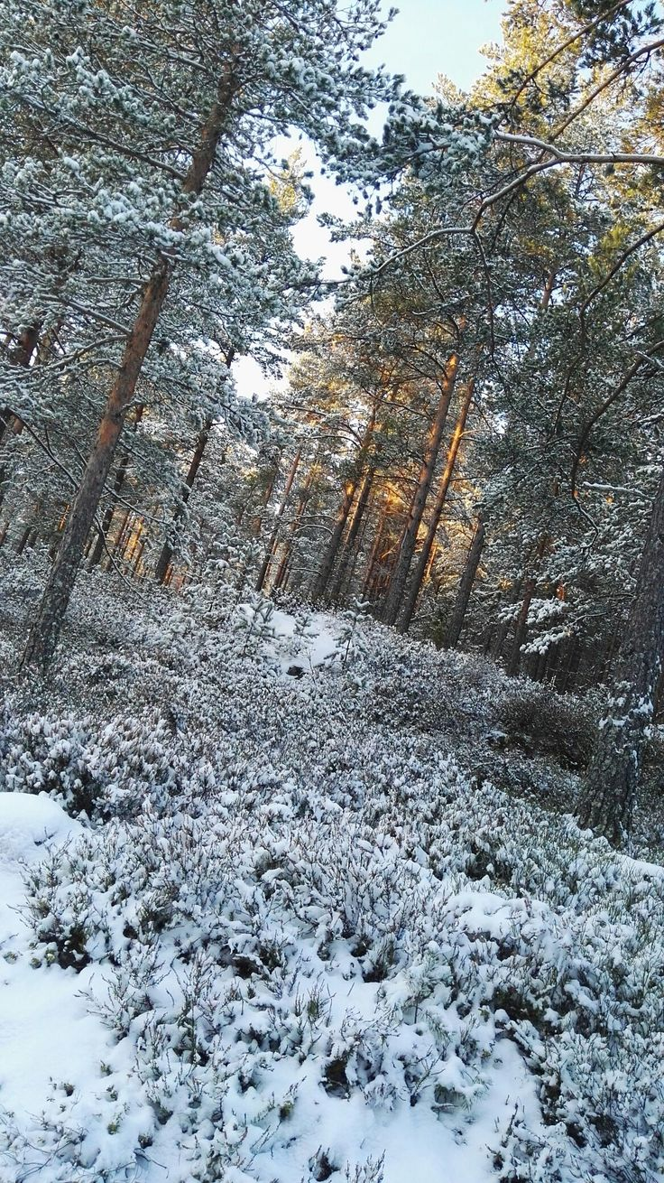 First snow 14.11.2017.  Just beautiful. Rudsåsen Skollenborg, Norway