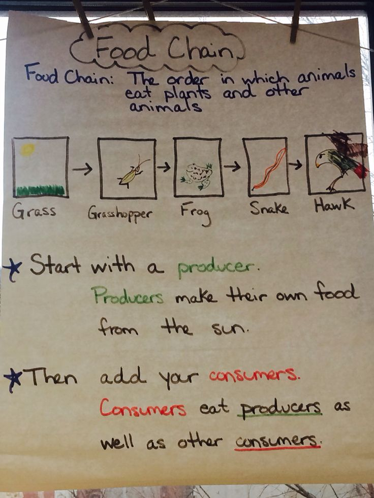 Food chain anchor chart #foodchain #producer #consumer #2ndgrade