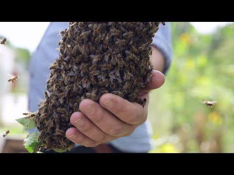 Unique Imkerei Summtgart Demeter Honig und Seminare in Stuttgart imkerei Pinterest Stuttgart Honig und Bienen