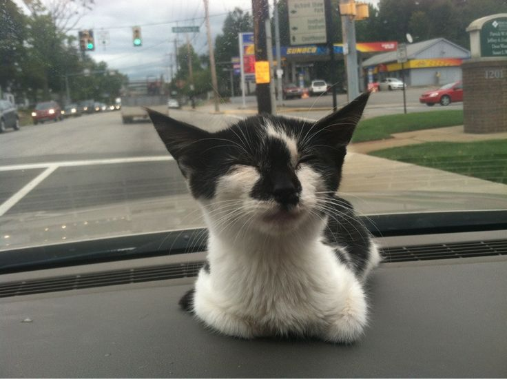 I got a new kitten and this is her one the way home! http://ift.tt/2dL6PGd