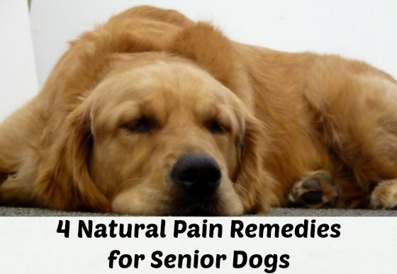 Natural Pain Remedies for Dogs If you have a dog who is in pain it can be heartbreaking to watch. Old age, arthritis, and certain weather conditions can aggravate pain in dogs and make them quite m...