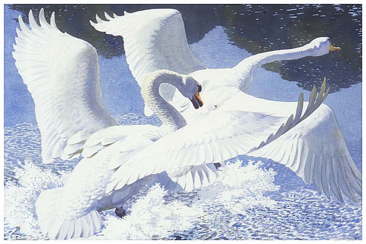 'The Rivals' by Charles Frederick Tunnicliffe (watercolour)