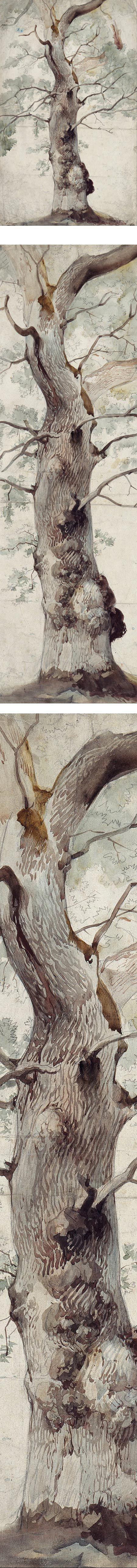 Study of a Tree, Johann Caspar Nepomuk Scheuren, watercolor