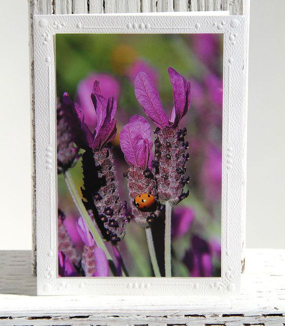 Ladybug in Lavender Photo Greeting Card Fine Art Photography