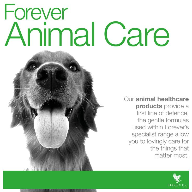 We all love our pets, keeping them healthy and happy is easy with Forever Livings Aloe Vera drinks and topical lotions. Safe, natural and cheaper than the Vets! http://www.aloeverashop.org.uk