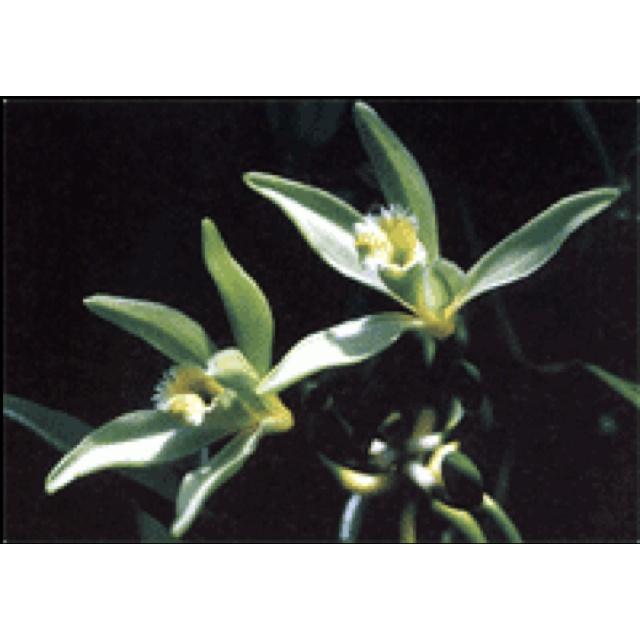 Xochitl Flower. | Flowers A-Z | Pinterest