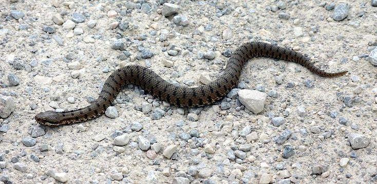 Con un anticipo insolito per questa stagione, ci sono già stati i primi casi, più o meno seri, legati ai morsi di vipere e serpenti.