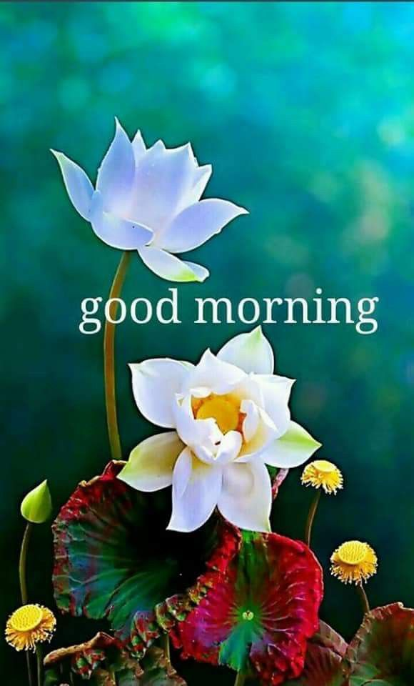 Good Morning Have A Nice Day Vijay G Morning Greeting Good