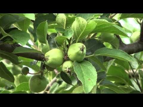 #ILOVEPOMARIO terza stagione Primi Frutti - YouTube