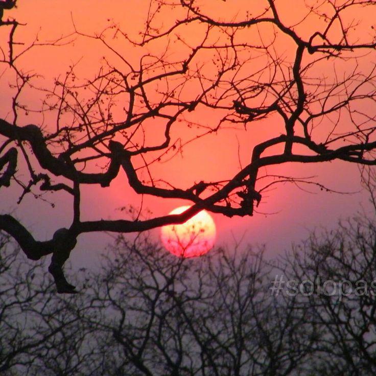 Sunset at Mudumalai #mudumalainationalpark #tamilnadu #mudumalai  #india #incredibleindia #solopassport #StudentFlights #indiaincredible #discover_india  #desi_diaries  #worlderlust  #india_gram #travelawesome #tasteintravel #travelingourplanet  #photographyofindia #findingindia