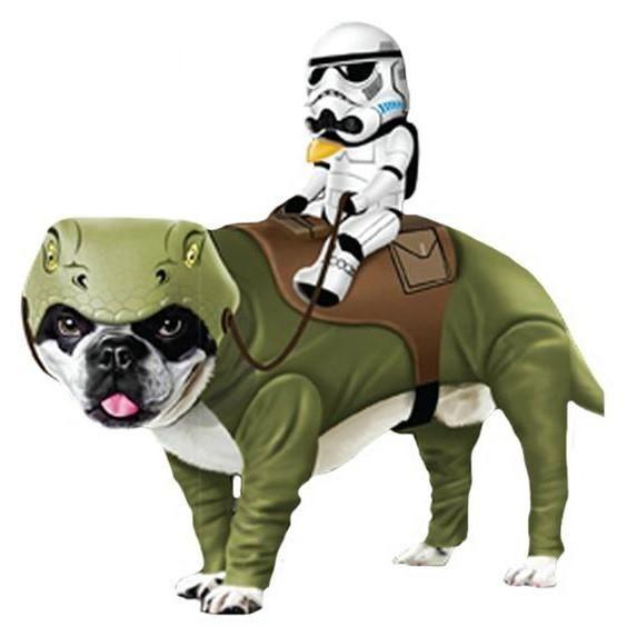 Los mejores disfraces de Star Wars para perro #ExpertoAnimal #MundoAnimal #ReinoAnimal #Animales #Naturaleza #AnimalesGraciosos #AnimalesDivertidos #Perros #Disfraz #StarWars