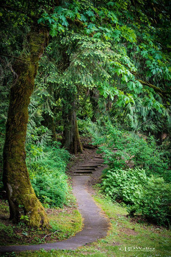 Cultus Lake Trail by Bruce Walter (Chilliwack, BC)