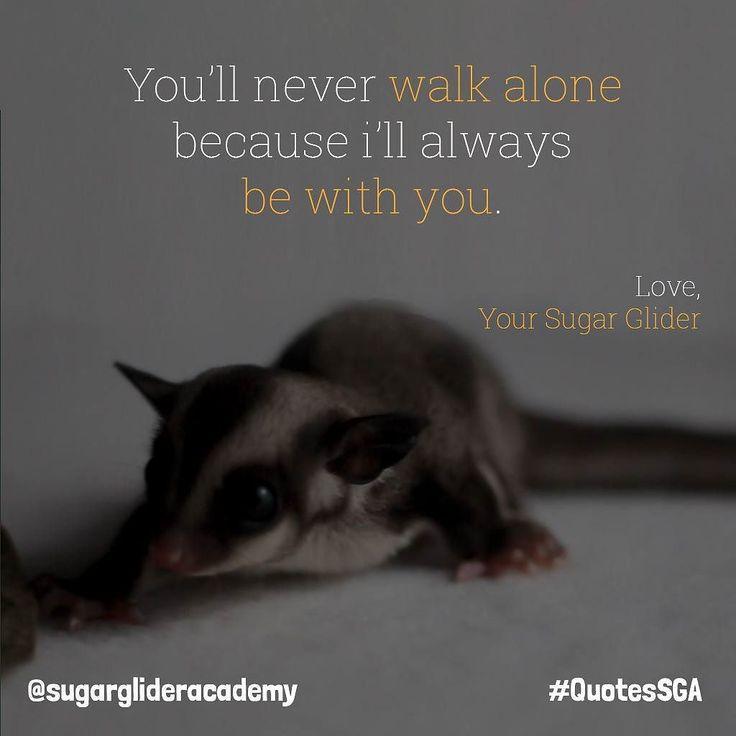 """Kamu tak akan berjalan sendirian karena aku akan selalu berada di sisimu."" . Order Produk SGA?  WA : 087739151147  BBM : 7650E8FB  Line : sugarglideracademy .  #sugarglider #sugarglideracademy #sugarglideronlineshop #sugargliderindonesia #sugarglidermalay #sugargliderthailand #motivasi #quotessga #jualsugarglider #フクロモモンガ #sugargliderjakarta #sugargliderofinstagram #exoticpet #indoexoticpets #kpsgi #kpsgijakarta #sugargliderslover #gembiraloka #safariprigen #glzoo #tamansafariindonesia…"