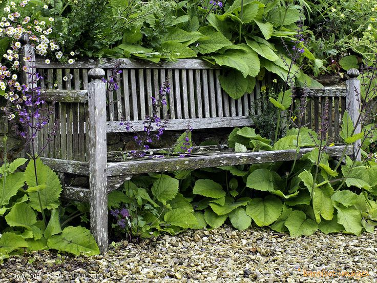 Prachtige, rustieke bank omgeven door  planten. Planten lijken op Brunnera macrophylla   - 239|366: Burrow Farm Gardens, East Devon - photo by Queen Breaca /  Baerbel A Rautenberg (BARefoot images)