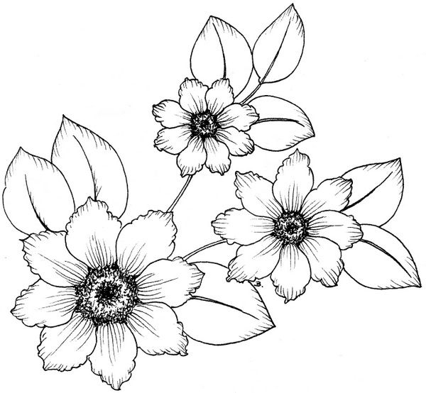 321 best Flower Line Drawings images on Pinterest