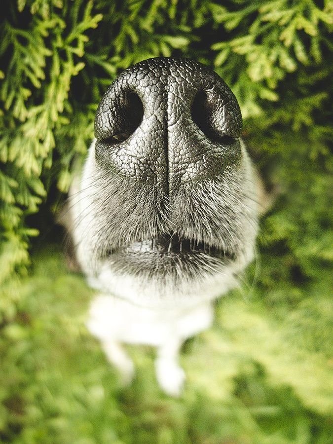 Happy International Kissing Day, everybody!    For print, license, booking requests: info@elkevogelsang.com