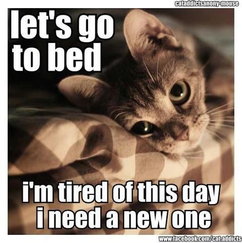 tired kitty.  Tired me. Night night