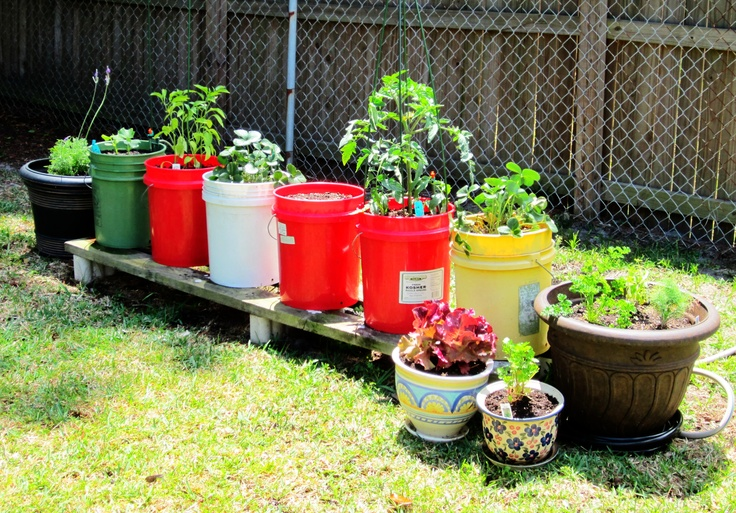 Our five gallon Firehouse pickle bucket garden. We have lavender, cucumbers, jalapeno peppers, strawberries, broccoli, tomatoes, lettuce, cilantro, lemon basil, dill, chives, watermelon, daisies, and parsley... :)