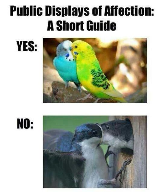 PDA Guide For Those Who Don't Get It