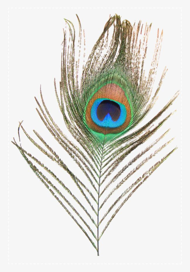 Peacock Feather Peacock Feather Retro Png And Vector With Transparent Background For Free Download Peacock Feather Peacock Best Background Images