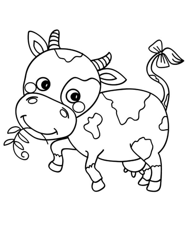 Cows Little Cows With Bow Tail Coloring Pages With Images