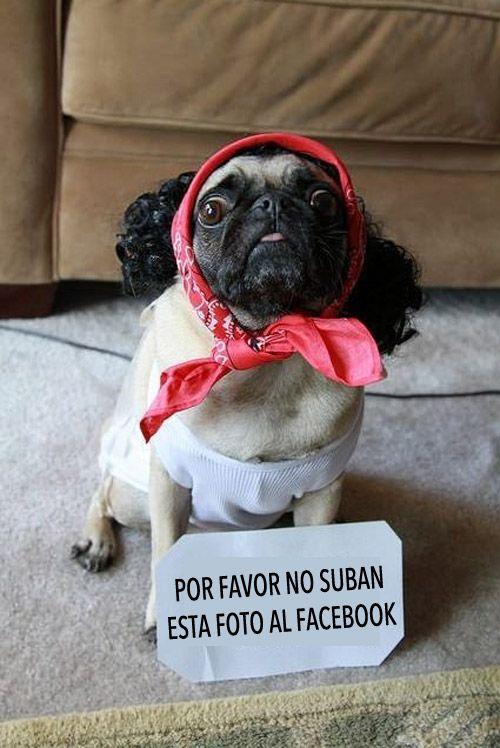 Perro avergonzado