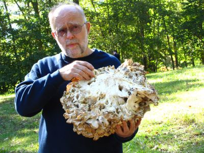 A rundown of mushroom species you can grow, and a bit about each of them
