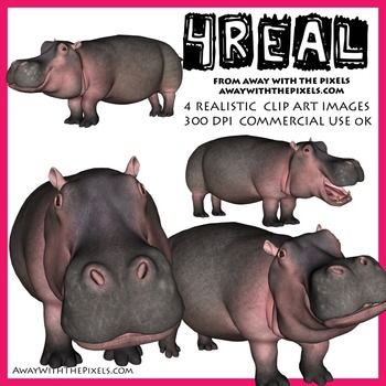 4 Real! 4 Realistic Hippo Clip Art Images - Hippo Clipart - realistic animal clip art for teachers! OK to make resources to sell on TPT - clip art OK for digital whiteboards too!