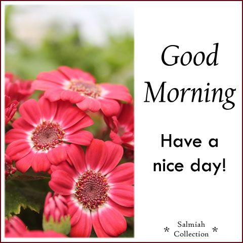 Salmiah Collection: Good Morning Wish 21: Have a nice day!