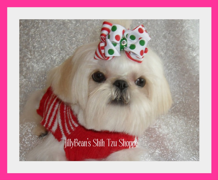 love the bowTzu Mom, Tzu Rules, Tzu Dogs, Shih Tzus