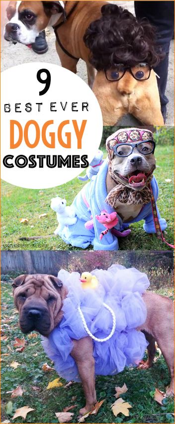 9 Snoop Doggy Dog Costumes.  Halloween costumes for pets.  Most clever dog costumes on a dime.  Cutest puppy costumes.