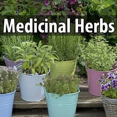Although it's important to stock up on some over-the-counter medications, it's important to be familiar with the medicinal properties of herbs. If you grow medicinal herbs, you won't have to worry about expiration dates on OTC meds.