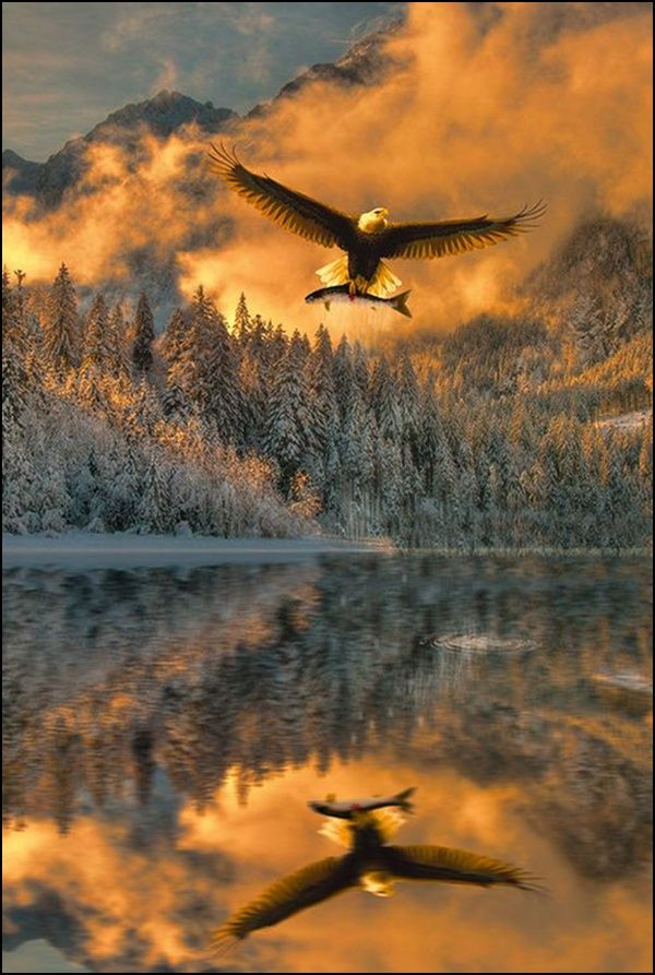 Beautiful eagle with his catch of the day! Love the reflections in the water. <pin by Barbara Doubek>