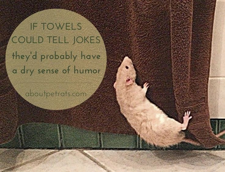 If towels could tell jokes they'd probably have a dry sense of humor