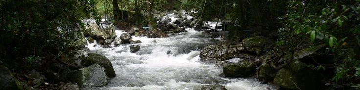 Rainforest Stream, NSW
