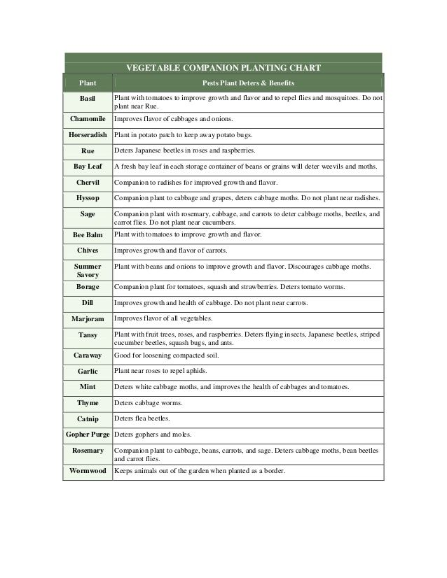 Herb companion plant guide