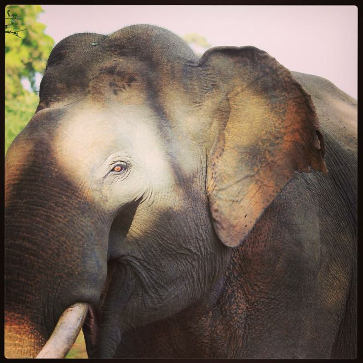 Close encounters with the elephant kind at Yala National Park.