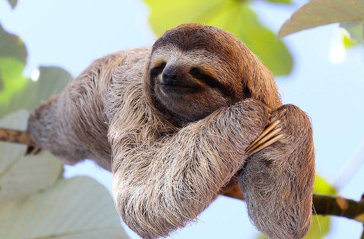 La méditation du paresseux via Shutterstock
