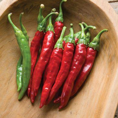 Red Rocket ORGANIC Pepper Seeds (Capsicum annuum) + FREE Bonus 6 Variety Seed Pack - a $30 Value!