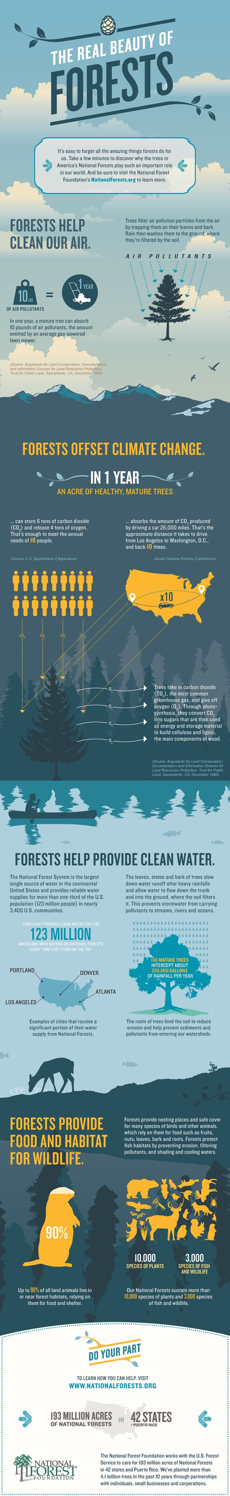 Great info and stats for Cadettes working on the Trees badge - the Real Beauty of Forests from the National Forest Foundation