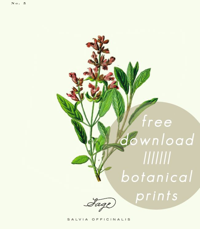 Free botanical prints from A Daily Something.  Would be beautiful in the kitchen as they are all herbs. Used in a symmetrical gallery on A Fabulously Organized Home.