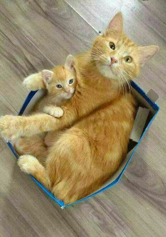 Big & Little Cats in a too Small Box