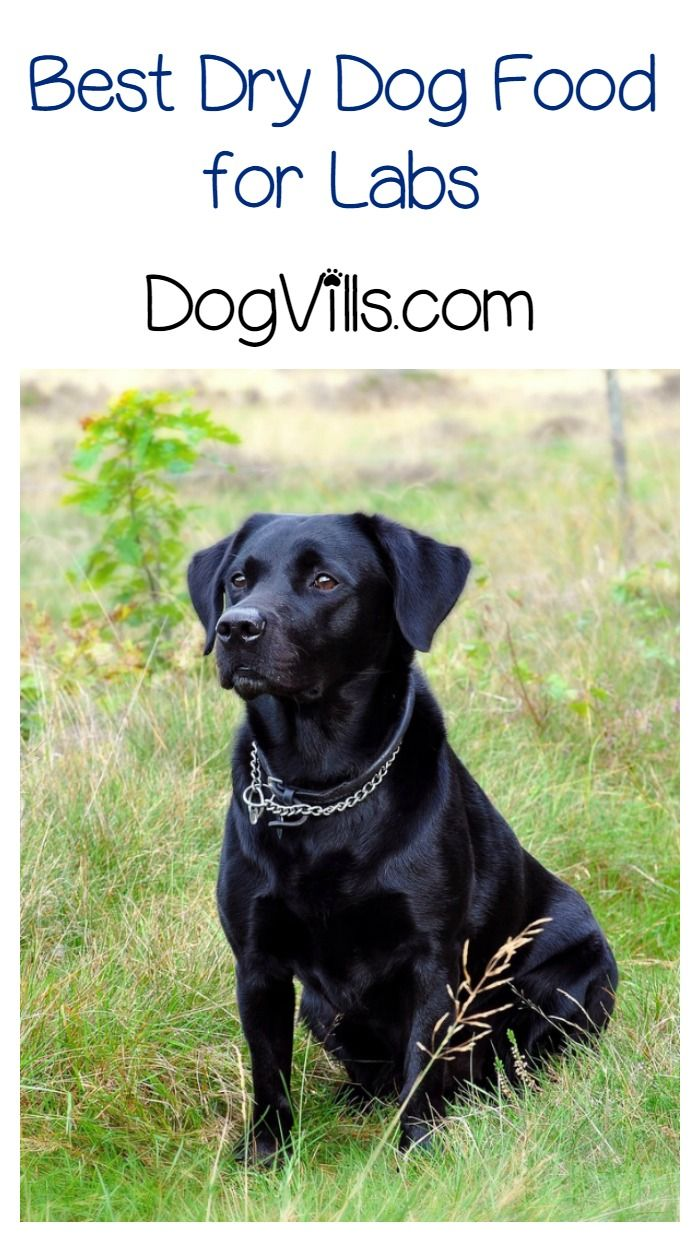 Dry Dog Food for Labs – Ingredients that Promote Better Health