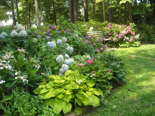 Lovely Hydrangea Garden (part Shade) From U0027A Heronu0027s Gardenu0027