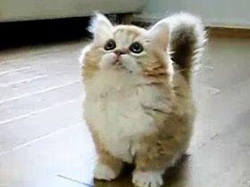 Gülümseten Kediler Video