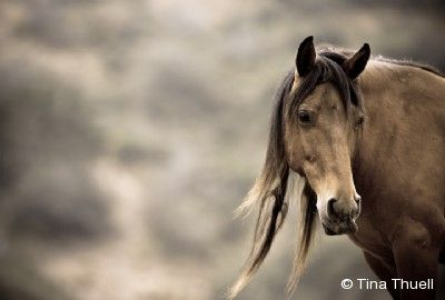 """2010 Equine Ideal Online Photography Contest Tina Thuell """"Gentled"""""""