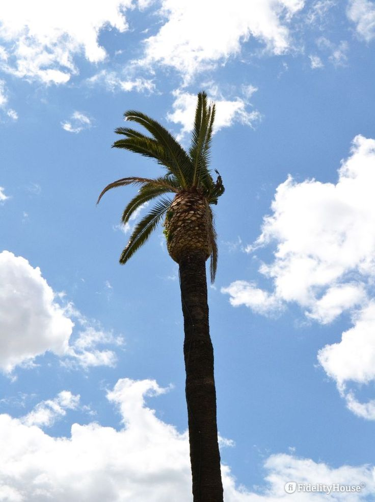 Quello che vedete è solo l'ultimo pezzo di una palma che si trova a San Paolo…