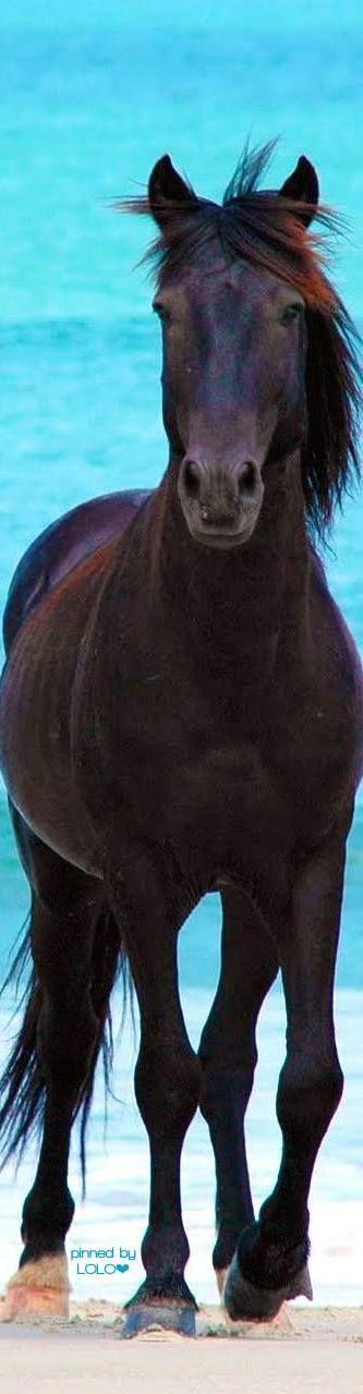 Equine - horse