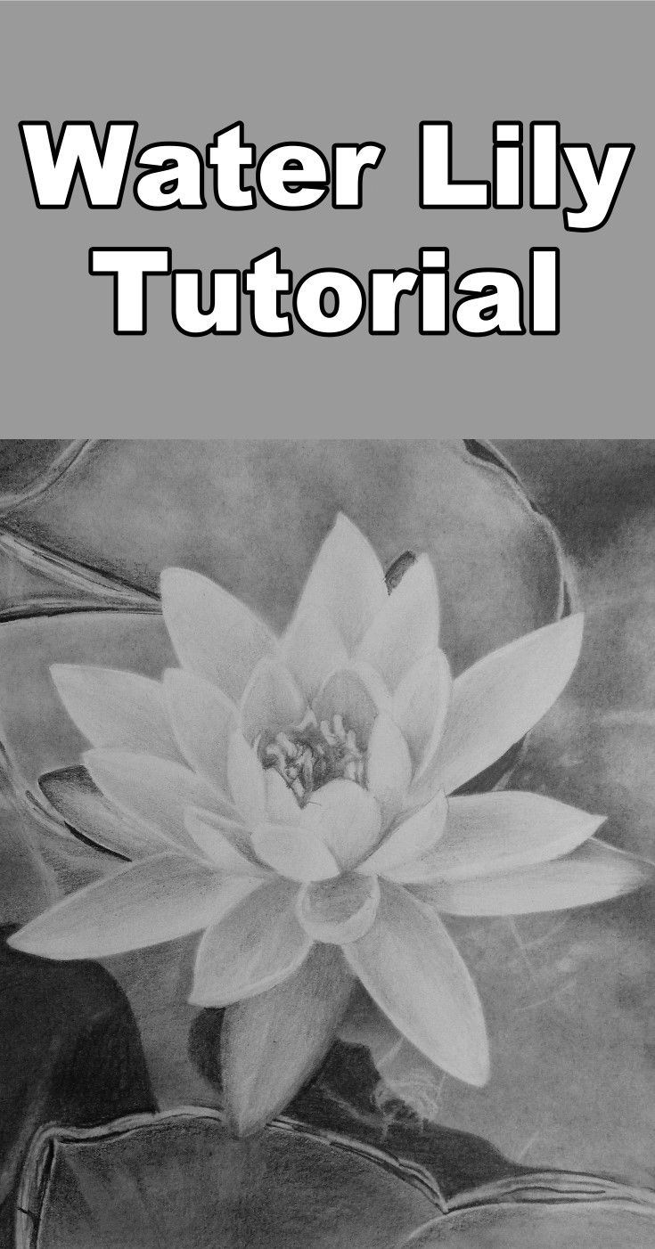 39 best free pencil drawing lessons images on pinterest art how to draw a water lily izmirmasajfo