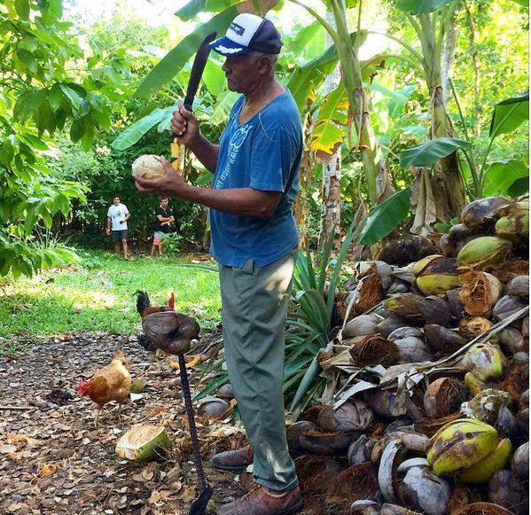 Har du nogensinde smagt fersk kokosnød? Her har du du i hvert fald chancen. Hvorfor ikke gøre som dominikanerne og blande rom i - vupti, så har du en Coco Loco! www.apollorejser.dk/rejser/nord-og-central-amerika/den-dominikanske-republik